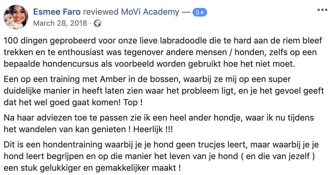 labradoodle - recensie - hondentraining - MoVi Academy online hondenschool