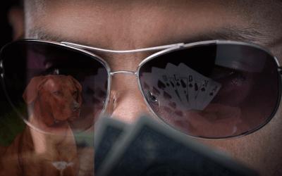 Waarom een Pokerface niet werkt bij je hond?