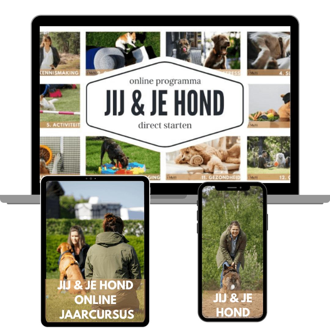 Jaarcursus JIJ en je hond - online hondenschool - MoVi Academy