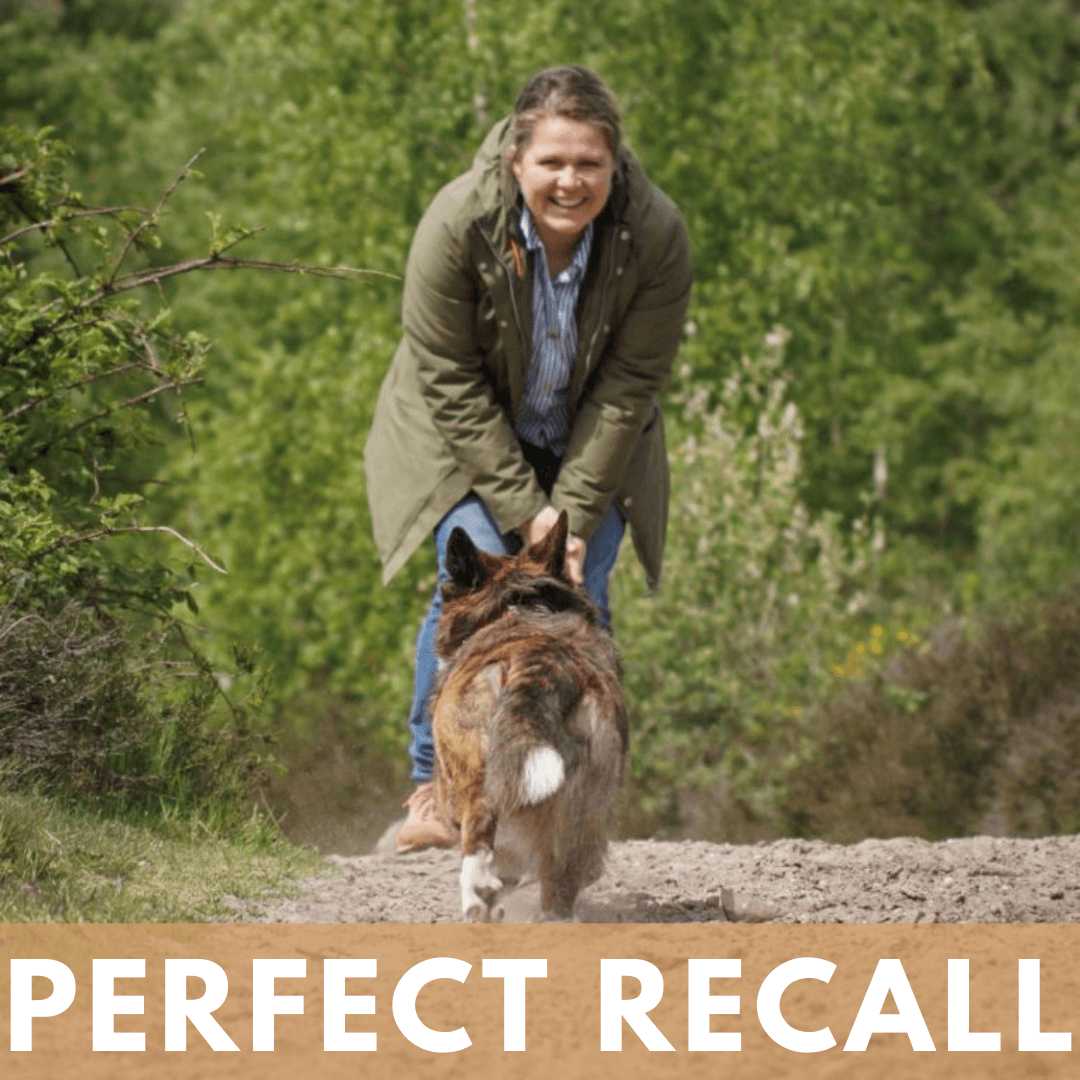 Perfect Recall online cursus