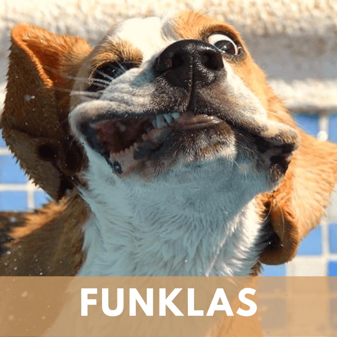 Funklas