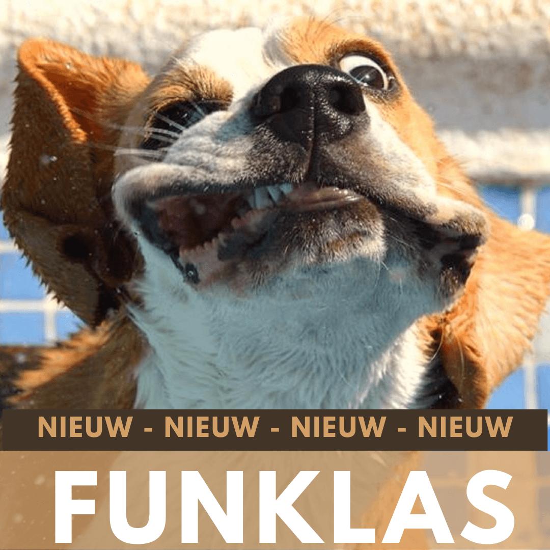 Funklas Jij en je hond