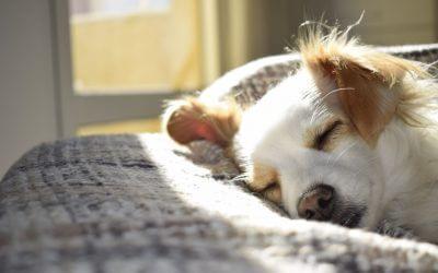 De ideale dagindeling voor hond en baas