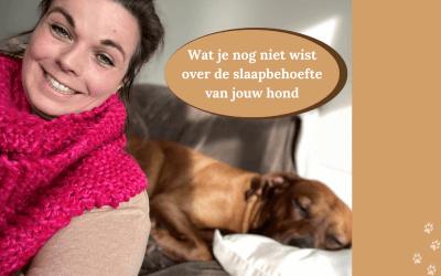 Slaapt jouw hond voldoende? Dit moet je weten over slaapbehoefte