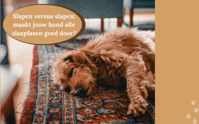 De slaapfasen die jouw hond doormaakt, mits hij lekker ligt