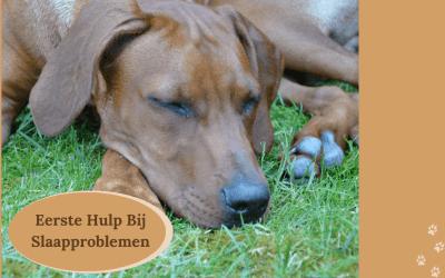 Help, mijn hond heeft slaapproblemen! Wat nu?