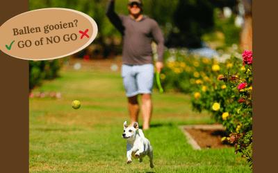 Een bal gooien voor je hond. Onschuldig vermaak……. of toch niet?